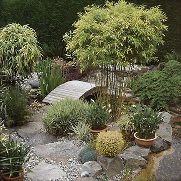 Asian Influenced Garden