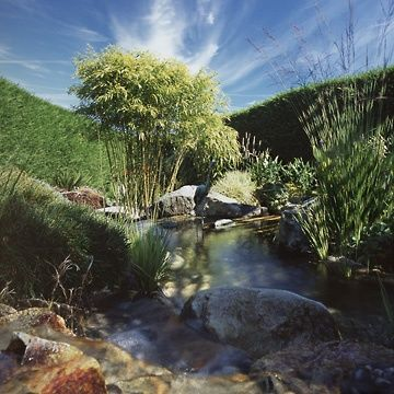 Organic Water Feature